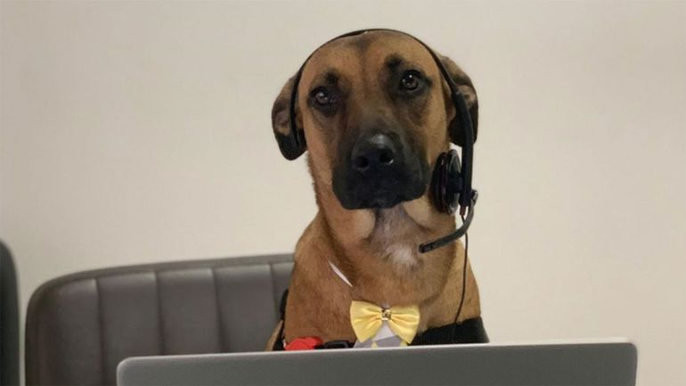 Poznajcie Tucsona, bezpańskiego psa, który został konsultantem samochodowym Prime Hyundai