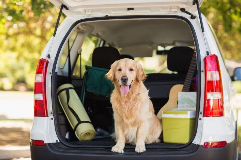 Jak bezpiecznie przewieźć psa lub kota w samochodzie?