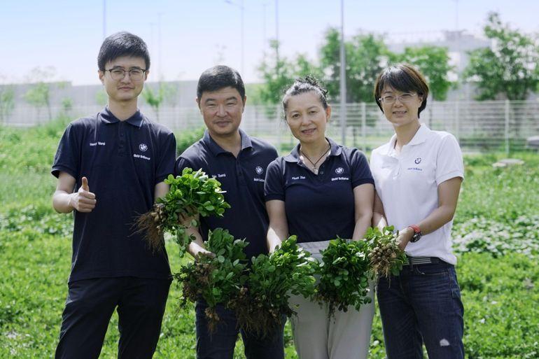 BMW uprawia orzeszki ziemne w Chinach